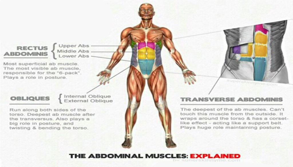 Defined Abs Body Fat Percentage Sixpack Facts