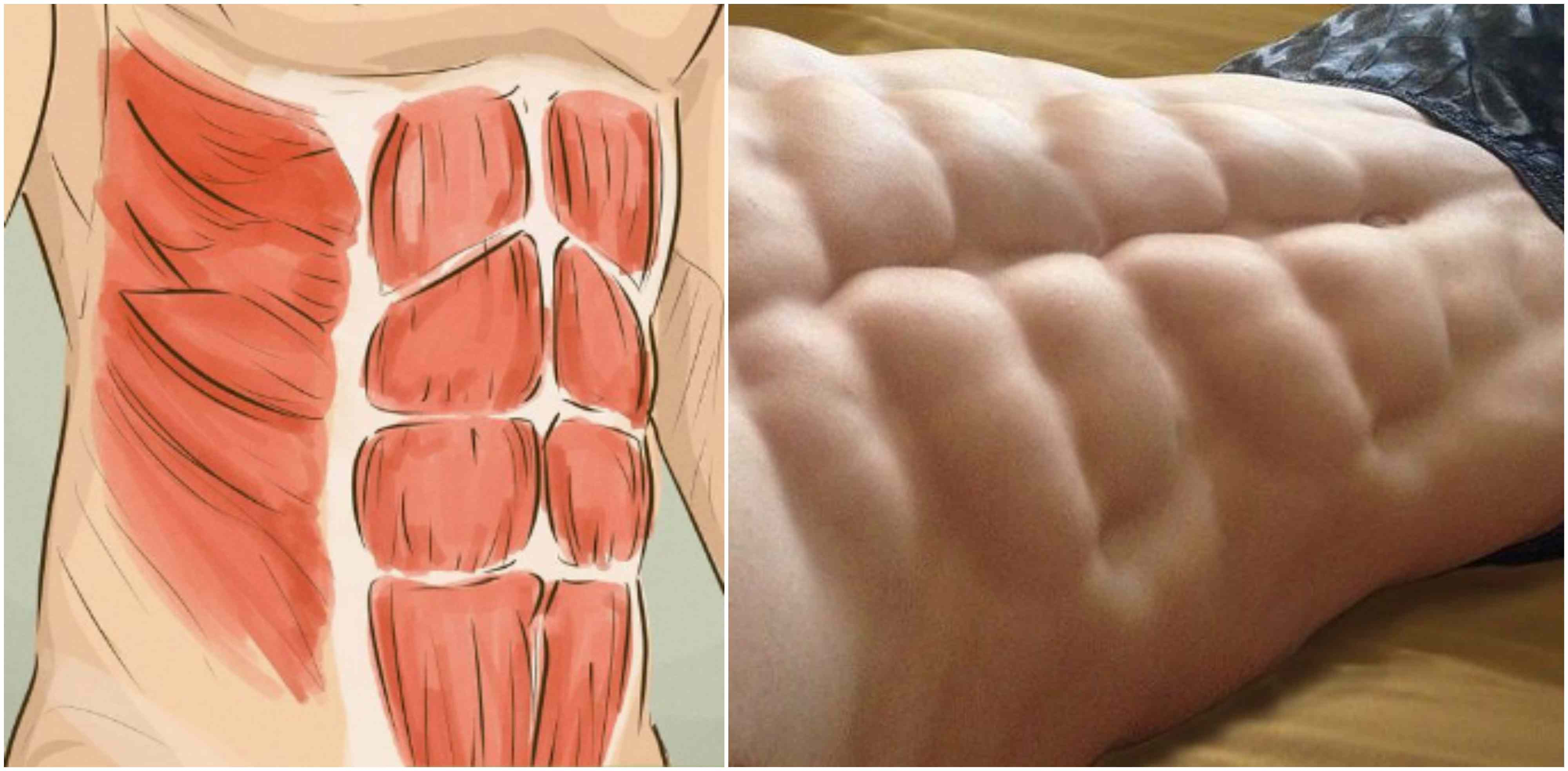Sixpack Facts | All About Abs - Part 5