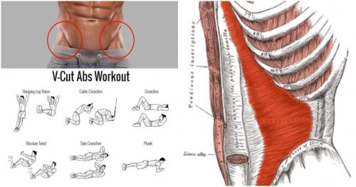The V-Shaped Definition With The Right Workout